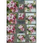 3D Decoupage Sheet. Dufex.  PYRAMEX.  Blossoms 248705